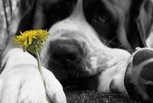 #MIMASCOTASOLIDARIA CONCURSO / Gana un mes de comida gratis para tu mascota y su apadrinado. El que obtenga más pines será el ganador.