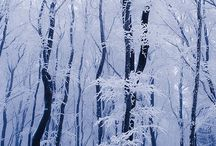Winterscapes / by Cinda Shaffer