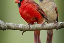 Awesome Birds