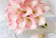 flores... uma das minhas paixões!!