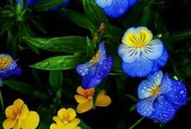 Gardening / by Rochelle Titko