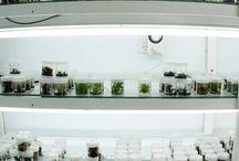 in vitro plants