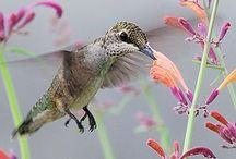 birds... / by Carol McCollum