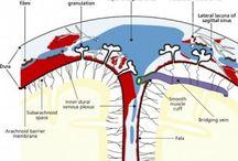 zatoki mózgowia