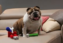 These guys know comfort... / Gorgeous dogs, cats and other animals road test #PlushComfort