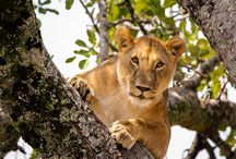 Amazing African Wildlife / Amazing pictures of wildlife from around the African Continent.
