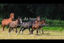 Home stories of our auction horses in March / They grew up as a family member. They grew up guarded. Their breeders took care of them and prepared them well for the auction with patience and trust. They are something very special. See here the home stories of our auction horses in March.