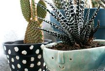 Plantes / Ma passion pour les plantes.