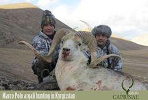 Marco Polo argali hunting in Kyrgyzstan