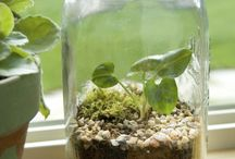 Nature, plants, environment