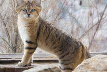 Hayvanlar Alemi / Sevimli, vahşi, tembel... Gününüze ilham katacak hayvanlarla tanışın