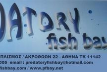 PREDATORY FISH BAY