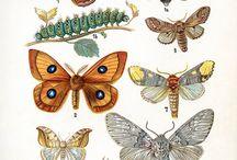 Schmetterlinge / So schön wie sie erschaffen wurden.