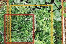 Edible gardens & Garden inspiration!