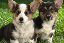 Fuzzy Wuzzy Puppies