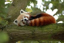 Animals In Trees / Pictures of birds, mammals, insects, and other animals and critters in trees.