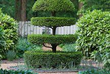 zelený svět / stříhané rostliny