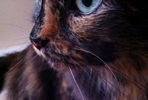 (Tortie) Cats