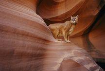 Wonderful Nature: mammals