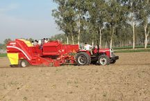 "Field Day Potato - India / Snapshots of the #FieldDay #Potato - India event held at Ludhiana, #Punjab recently, where #MasseyFerguson tractors from #TAFE gave an account of their mettle and efficiency.  ""The Field Day Potato event presents the lifecycle of the potato ranging from topics like soil preparation, plant protection and fertilization, planting and harvesting to the potato processing industry showcased by Indian and German partners,"" - website, DLG International. / by TAFE - Tractors and Farm Equipment Limited"