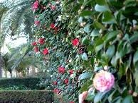 garden inspiration / Beautiful plants, clever ideas...lots of things I would love for our garden.