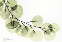 láminas vegetales