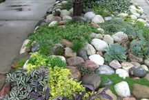 Front yard / Ideas suggestions  / by Tony Gaj