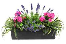 Colour-splash window boxes / Our range of colourful window boxes from our garden to customer's gardens!