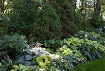 Giardini hosta