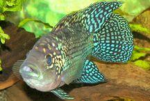 Ciclids / Dr. Thomas R. Reich    @AquariumFishNU follows you    Dr. Thomas R. Reich is a PhD Ichthyologist and is one of the world's most experienced experts in the field of fresh water aquarium fish.   Orlando, Florida   ·  aquariumfishadvisor.com