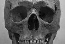 Czaszki, kości