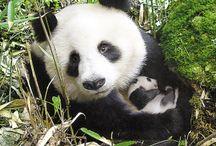 Mama and Baby Animals