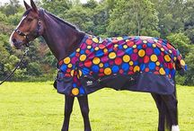 Horse Wear / Rugs and Headcollars for your Horse