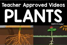 Plants and growth (Classroom )