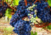 oenotourisme et vins