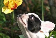Salud para nuestros perros y gatos. / Información que conseguimos online, que nos ayuda a cuidar mejor a nuestras mascotas.