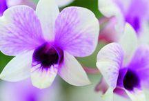 floristik Winter