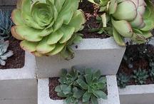 Ciment et cactus