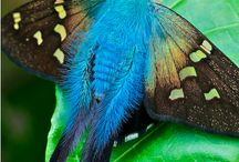 God's Beautiful Colors / by Donna Ruth Ceglinski