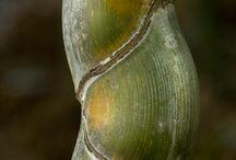 Bamboo ♡ / by Bethel Stephensen