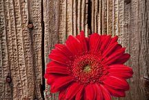 Seja flor