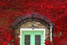 DOORS AND WINDOWS  / by Kay Droege