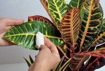 Entretien plantes interieures