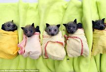 Cute Bats / Pictures illustrating that bats are the cutest!