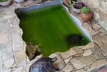 piscina para tartarugas