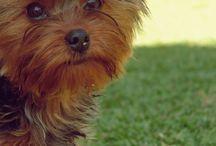 My Pets / Amo muito eles!
