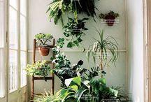 観葉植物飾り方