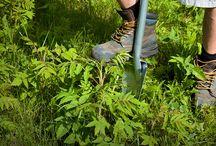 Gardening / Gardening Ideas and tips for http://www.amazon.com/Root-Assassin-Shovel/dp/B00KAGXUT2/ref=sr_1_26?ie=UTF8&qid=1426529854&sr=8-26&keywords=shovels
