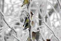 Winter Birds!