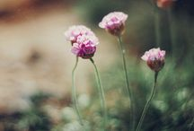fleur sauvage